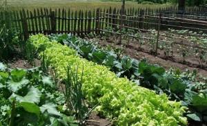 Du compost fait maison aux solutions bio pour soigner le jardin « au naturel », le jardin bio n'est pas forcément plus compliqué que son voisin « tout chimique ».