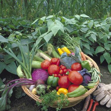 Panier de légumes issues de l'agriculture biologique