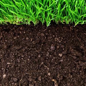 Prendre soin du sol au jardin est primordial pour le jardinier bio.